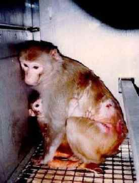 aip-20120228-vivisection-04