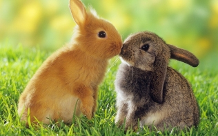 Rabbits-Kiss.jpg