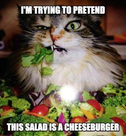 saladcat2