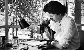 Rachel Carson Studying