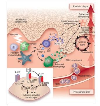 fig 4 pathophysiology