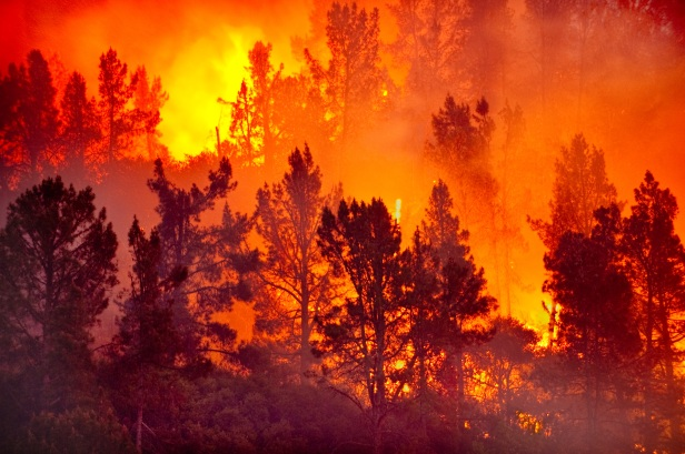 wildfire-widescreen-a