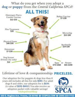 CCSPCA-Dog-Value-792x1024.jpg